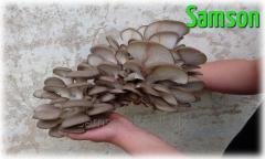 Инструкции по выращиванию грибов