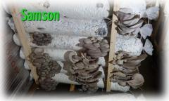 Препараты для развития грибницы