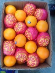 Egypt oranges and tangerines