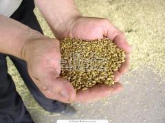 Пшеница 3 класса Казахстан