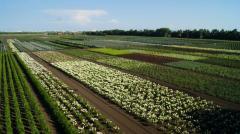 Каталог декоративных растений, общий