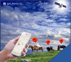 SPOT TRACE! GPS a tracker for horses!