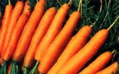 Морковь ранняя