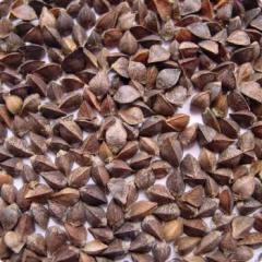 El trigo sarracen