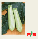 Vegetable marrow seeds Iskander F1