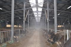 牲畜设施的输送机