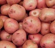 Table potato wholesale. We accept preliminary