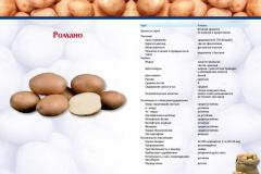 Potatoes high-quality Romana. We accept