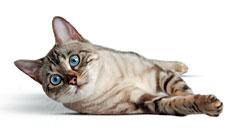 Корм для кошек FELINE HEALTH NUTRITION WET
