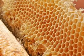 Wax honeycombs