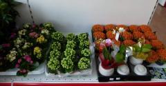 Комнатные цветы и растения.
