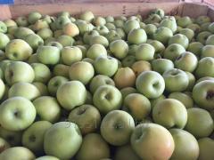 Яблоки с собственных садов