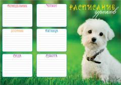 Расписание уроков A3 Щенок