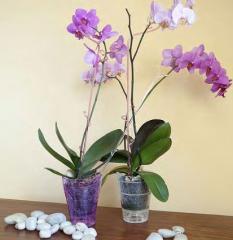 Flowerpots for an orchid