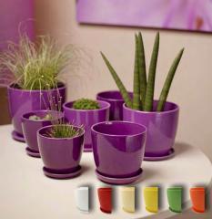 Flower pots are ceramic