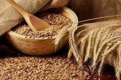 Фуражное зерно