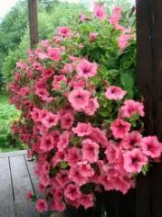 Ornamental plants for gardening to buy ornamental