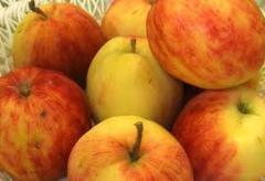 Grade apple-trees Screen, Saplings of apple-trees,