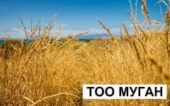 Пшеница в Костанае