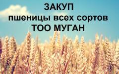 Закуп пшеницы всех сортов