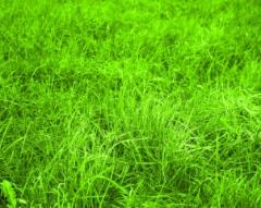 Грубые зеленые корма