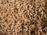 Пшеница пятого класса