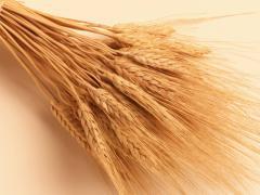 Пшеница 3-го класса в Казахстане