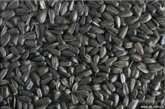 Sunflower seeds are confectionery