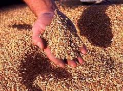 Зерно фуражное в Костанае