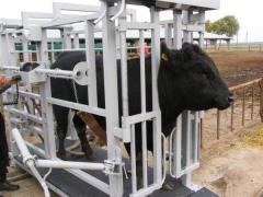 El peso para los animales