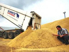 Ihracat, Kazakistan Buğday