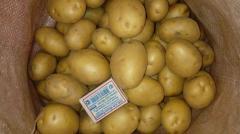 Картофель семенной 1 репродукция и сорт Гала