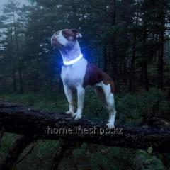 LED Dog Collar for USB