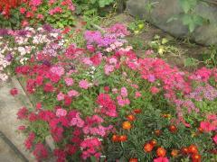 Seedling, saplings, gardening