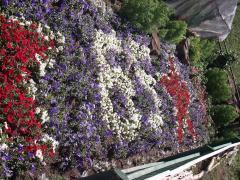 Рассада однолетних цветов