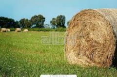 Участки личных крестьянских хозяйств