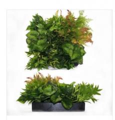 Ornamental plants for landscaping