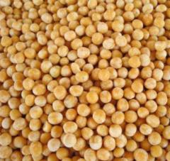 Peas polished, solid 1st grade