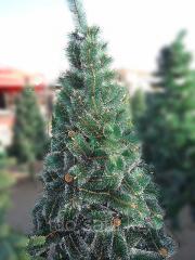 Новогодняя елка, польская