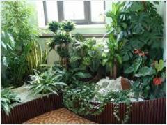 Уход за комнатными растениями, консультация,