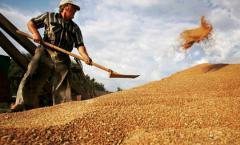 Grain, grain crops from Kazakhstan, Kostanay, Mugan LLP