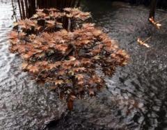 """Фонтан - дерево """"Японский клён"""""""