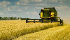 Wheat a fodder 1 class, wheat in Kazakhstan to buy