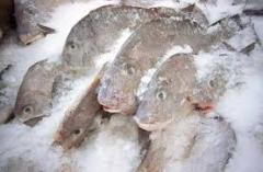 The bream is average frozen