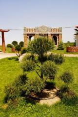 Bonsais pine, Almaty, Kazakhstan