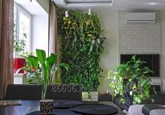 Профессиональный уход за растениями цветами