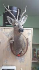 Taxidermy, stuffed animals and dummies