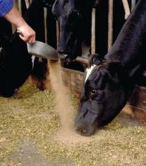 Добавки пищевые для животных