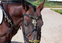 Harness, harness, reins for riding animals, the