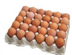 Яйцо Д0
